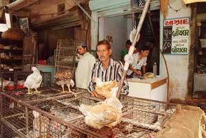 インドのチキン