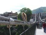 インドの野猿