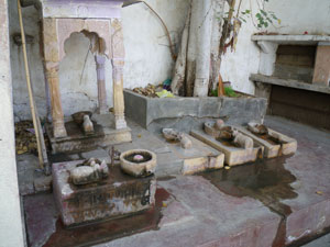 インド・バルメールの旅
