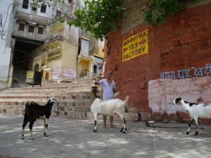 インド、ヴァラナシのガート
