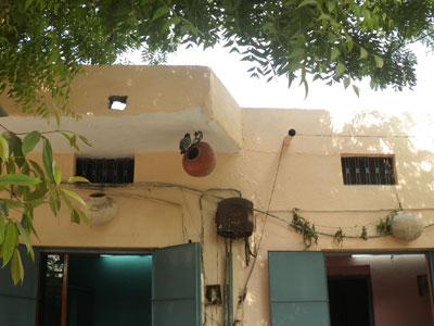インド、軒先のハトの家