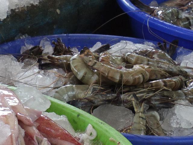 南インド、ケララ州、フォートコーチンのチャイニーズ・フィッシングネットそばのセリで売られている魚