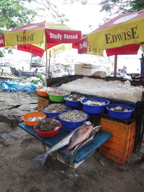 南インド、ケララ州、フォートコーチンのチャイニーズ・フィッシングネットそばの魚屋