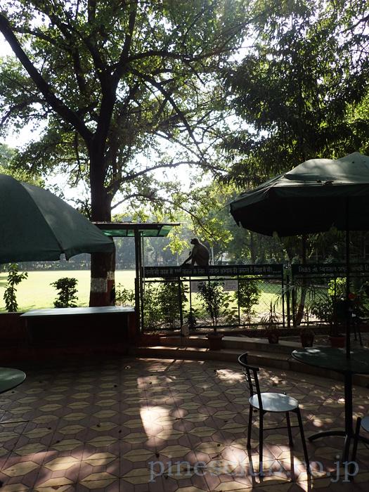 インド・ガンディー大学のカフェテリアに来た猿