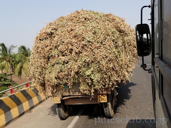 インド、グジャラートの落花生