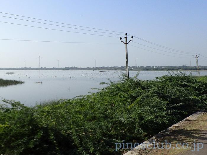 インド、グジャラート州ポルバンダール郊外
