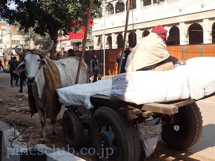 牛車の荷台に乗る飼い主
