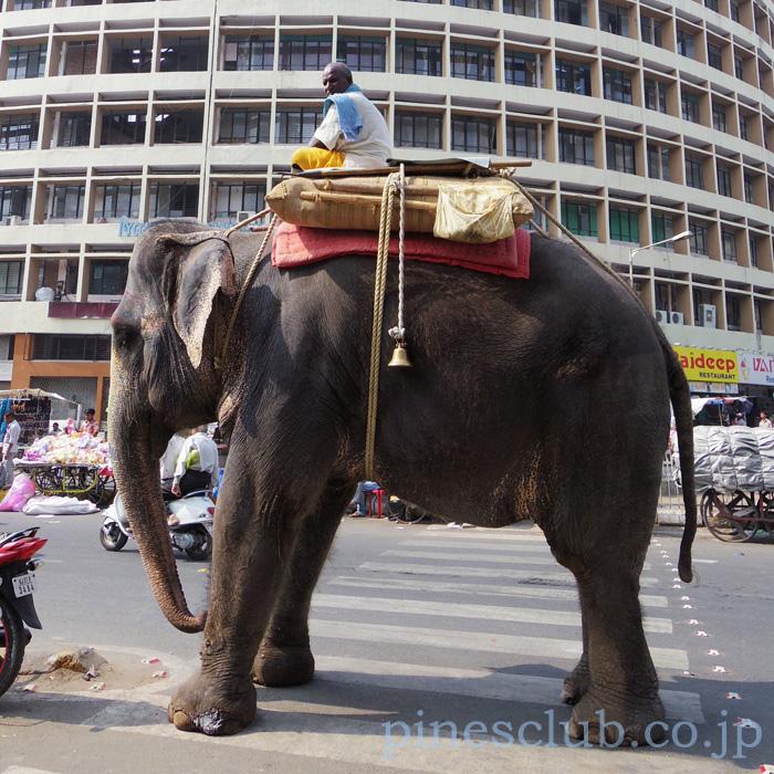 インドの街角の象