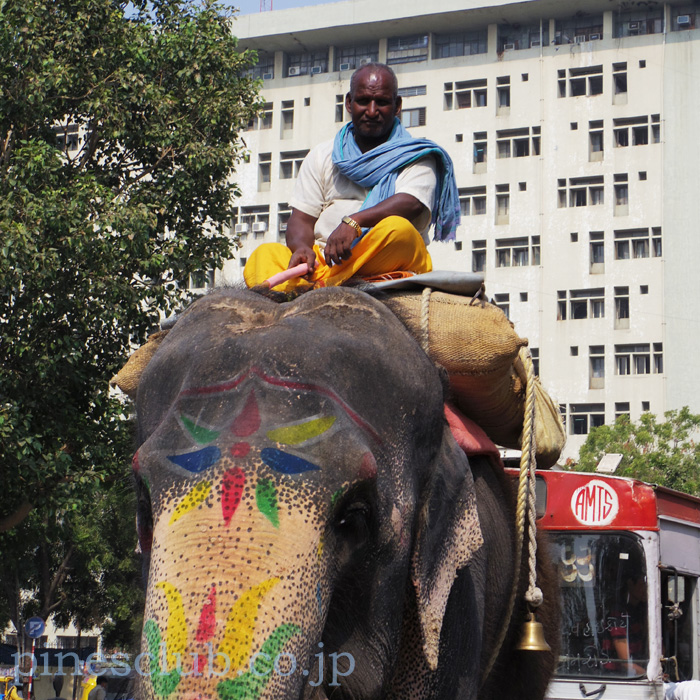 インドの象と象遣い